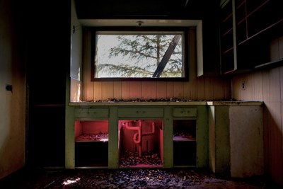 Image of abandoned house in Uranium City. Tree visible through a window, light falling into a broken kitchen counter